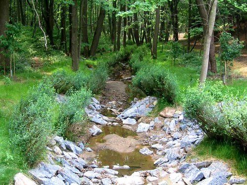 Photo set of Dumont Oaks Stream Restoration and Stormwater Pond Retrofit