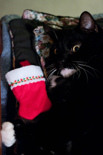 Bad Kitty...I found catnip in my stocking