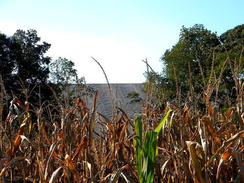 trees tree corn utility ash mound tarp coalash powerplantcoaldagsborosussexcountydedelawarenrgcoalfiredpowerplantcoalfiredindianriverpowerplantindianrivernrgenergy coalashmound