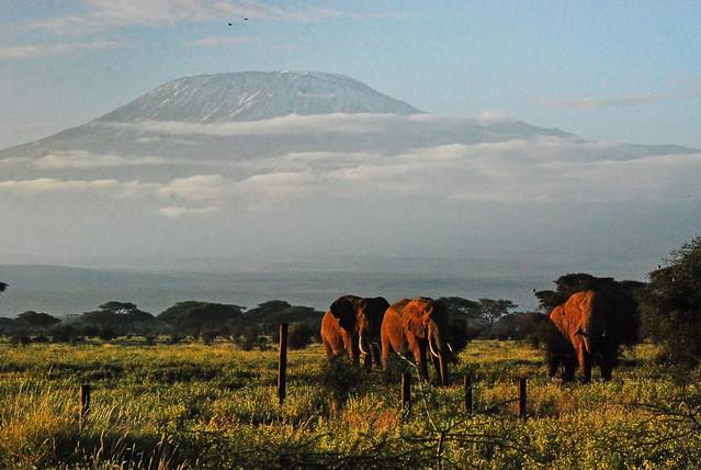 a postcard from Amboseli