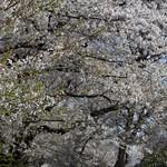 0404_chiyoda-41