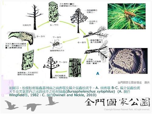 中山林松樹救治(0409)-03