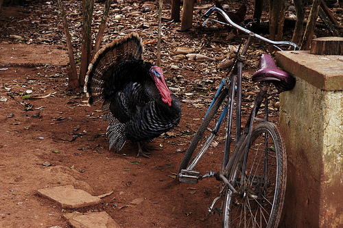 turkey-bike