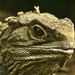 Tuatara - Photo (c) Sid Mosdell, some rights reserved (CC BY)