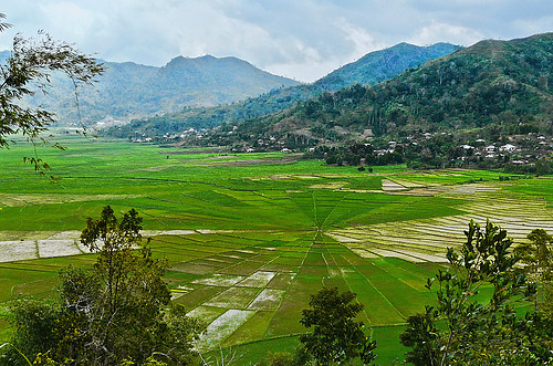 mountain flores nature indonesia spiderweb ricefield ruteng