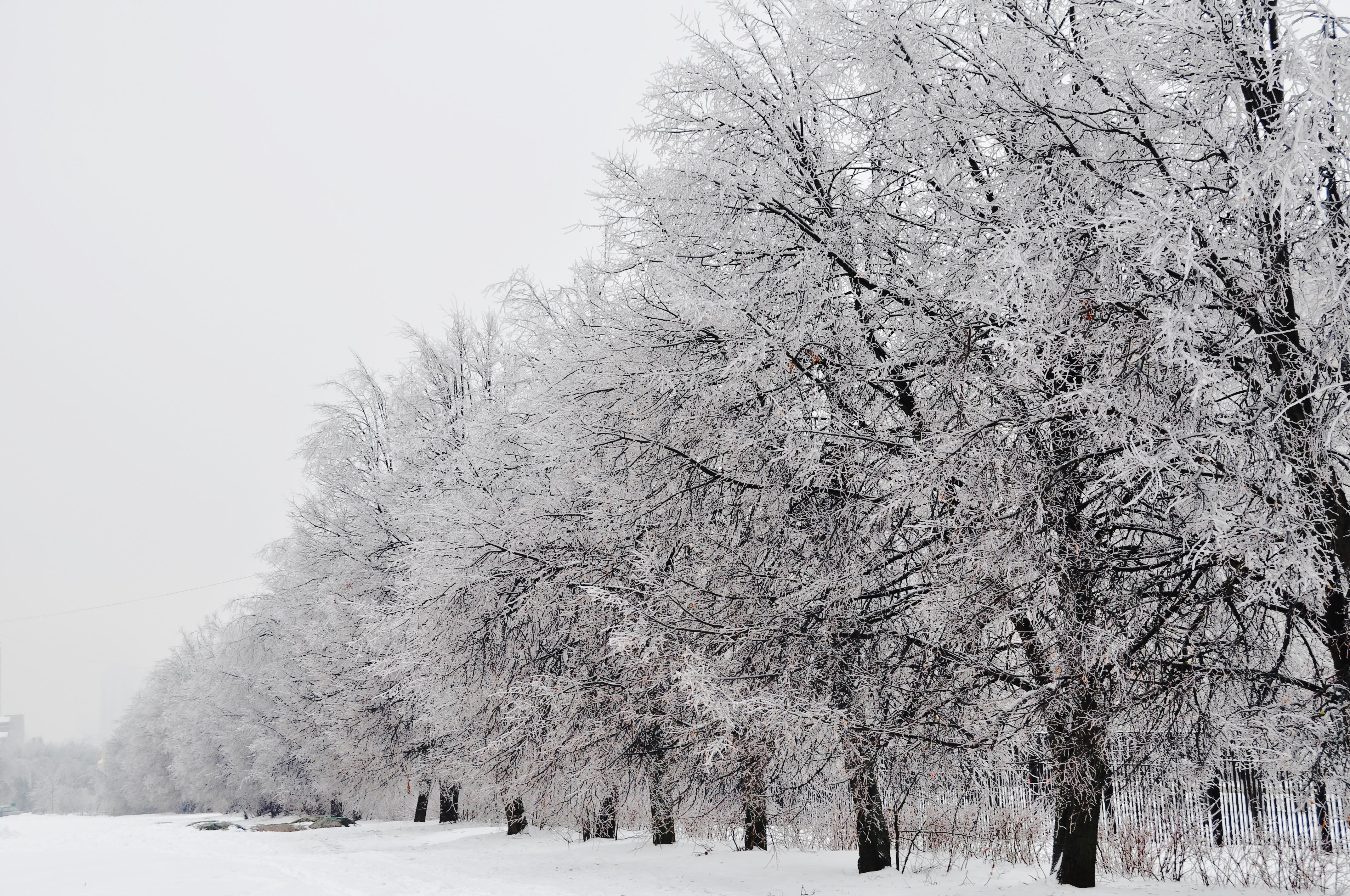 Winter Russia 2 by BudaKedrova, via Flickr #Beautiful # ...