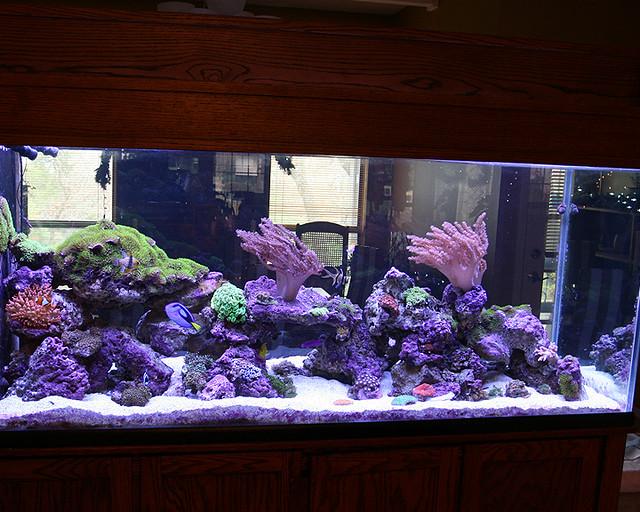 200 Gallon Marine Aquarium With Stunner Led Strips Flickr Photo Sharing