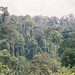 Small photo of Dipterocarp forest