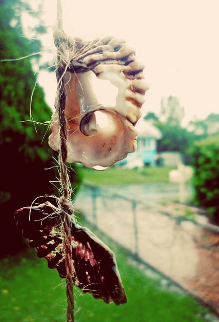 Subarban >> shell garland in the rain   Flickr - Photo Sharing!