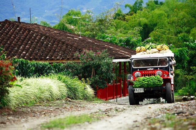 Imagen de un Jeep Willys cargado de bananos en el Paisaje Cultural Cafetero.