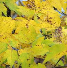 Autumn colors Walnut Creek Lake Raleigh NC 0492