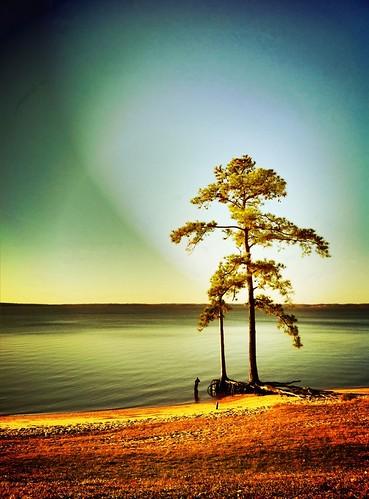 trees tree virginia williamsburg iphone pictureshow 365pix iphone4 iphoneography