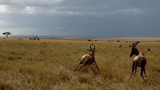 Day 76 - Maasai Mara-17980
