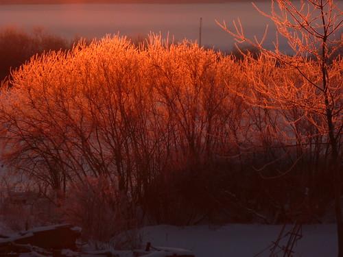 schnee winter sun snow sunrise sonne sonnenaufgang raureif