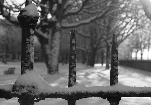 Snow on Railings