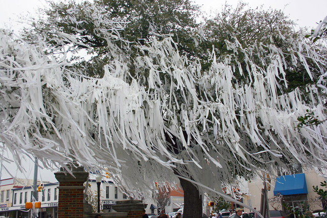 Day 11 {The Rolling of Toomer's Corner:National Champs}