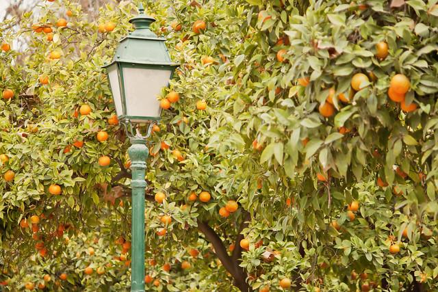 Naranjas I