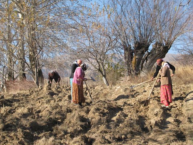 Women tilling the hash tajik soil flickr photo sharing for Soil 7t7 woman