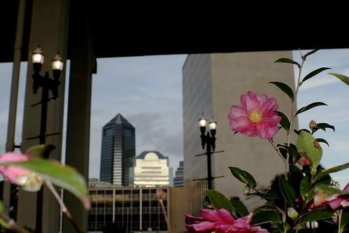 December Blooms Under Acosta Bridge