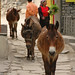 Mules Walking through Town - Annapurna Circuit, Nepal