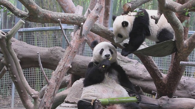 Just you 'n' Me by Chicago featuring Yun Zi and Bai Yun