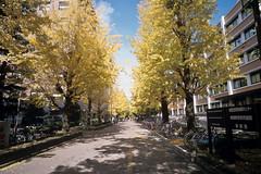 Kyoto_20101116_E100G-Roll-13_28