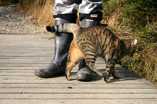 a man, a cat and a pair of Hunter Boots