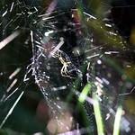 Bild von Botanical Garden in der Nähe von Porto Alegre. fauna spider botanicalgarden