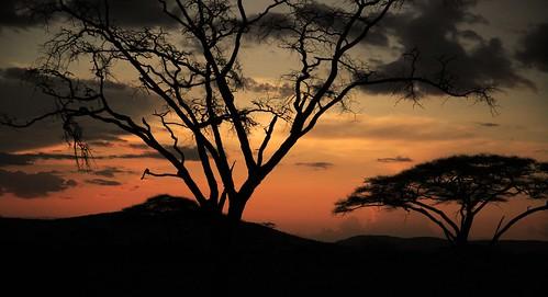 Tanzania dalla vita di Pier Paolo Pasolini