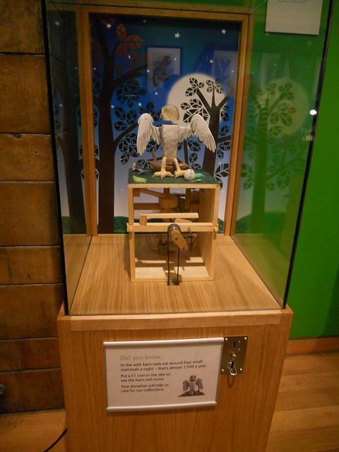 Barn owl natural history museum explore bibi 39 s photos for Bibi shehar bano history