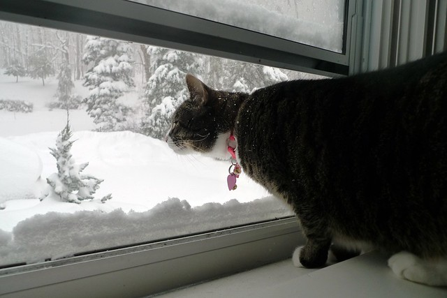 Pippa in the Window with Snow