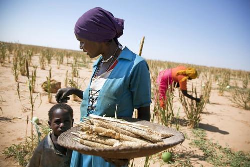 One Campaign非洲地區總監、報告的創辦人警告,忽視非洲農業存在的性別差異是很危險的事。(圖:United Nations Photo)
