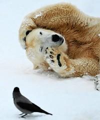 Polar Bear and Bird