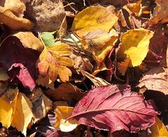 0036 Autumn