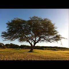 Empty field big tree