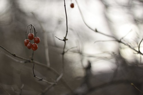 Red berries in a desolate world.