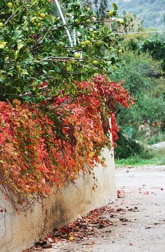 Autumn in Greece
