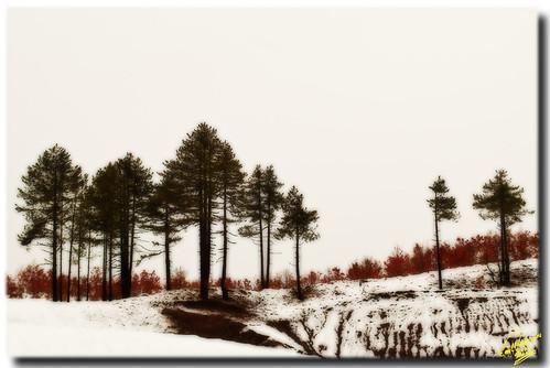trees winter snow geotagged sketch hellas greece hdr d90 pindos notanhdr nikond90 whiteenvironment mygearandme mygearandmepremium flickrstruereflection1 flickrstruereflection2 flickrstruereflection3 geo:lat=39756856546216326 geo:lon=2113645032806403 rememberthatmomentlevel1 rememberthatmomentlevel2 rememberthatmomentlevel3