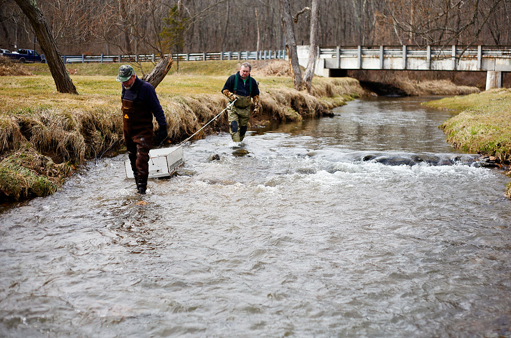 A fishy fascination releasing live trout words and light for Dunn fish farm