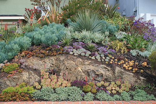 growingontheedgenet View topic Succulents in northern