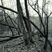 Öfter Wald #12   -Mikado-