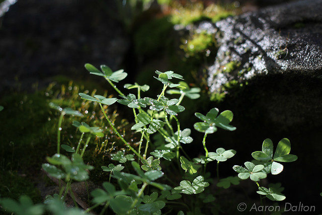 Dewey Clover Moss and Rocks.jpg