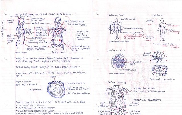 Anatomy and Physiology Papers