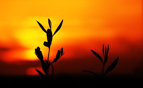 Finding Solitude in an Olive Leave Sunset