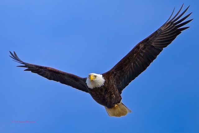 Rock+eagle+state+park