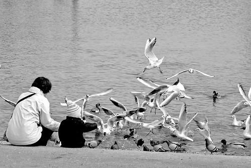 birds vs. breadcrumbs by PuertoNico