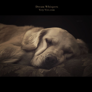 Dream Whispers