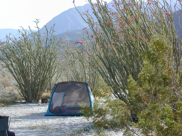 Borrego Camping, Primitive and Free
