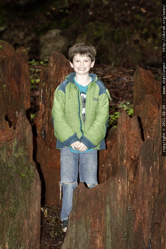 nick standing inside a giant redwood tree stump