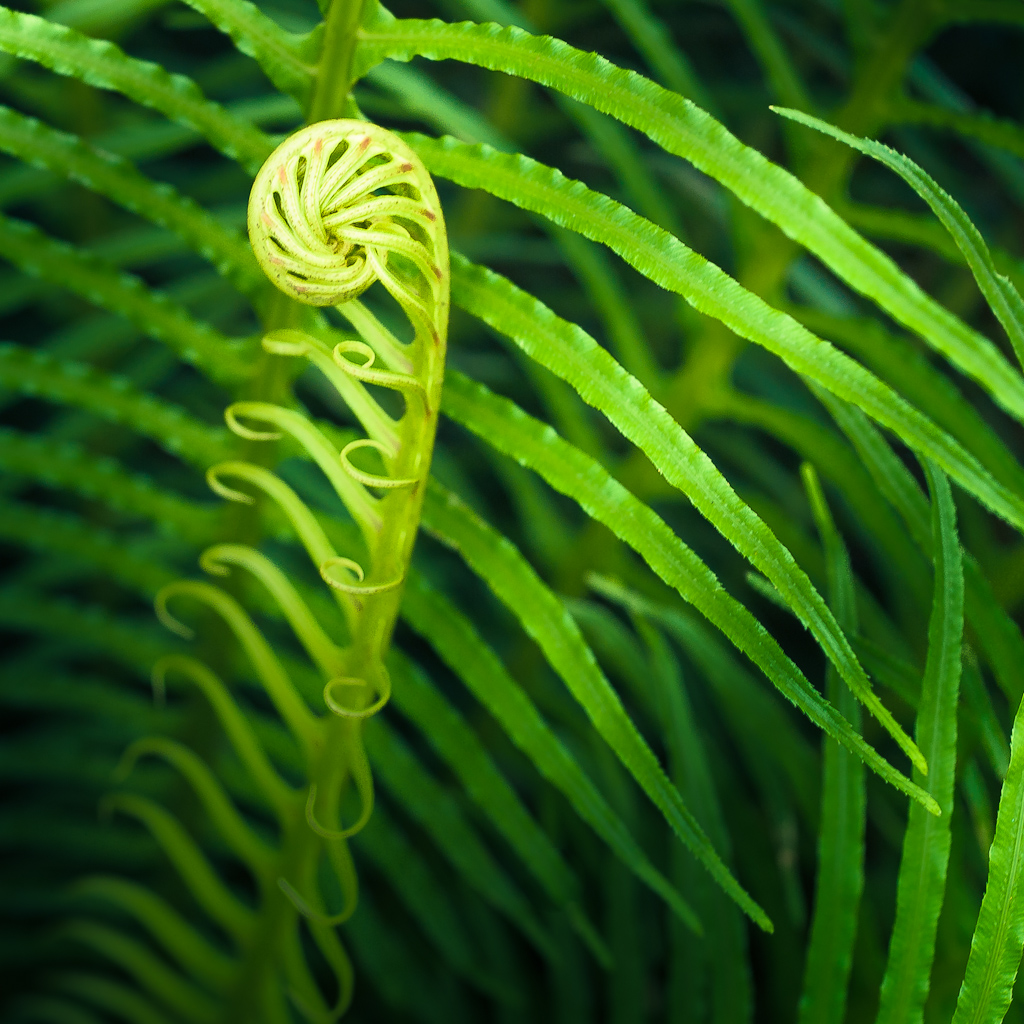 Nature Fern